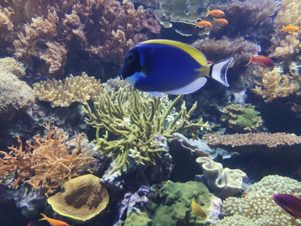 Aqaba's Colorful Underwater World